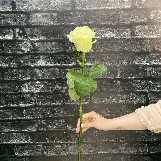 Роза Эквадор (Мондиаль) 80см
