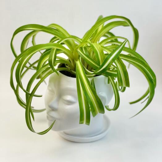 Кашпо голова с растениями