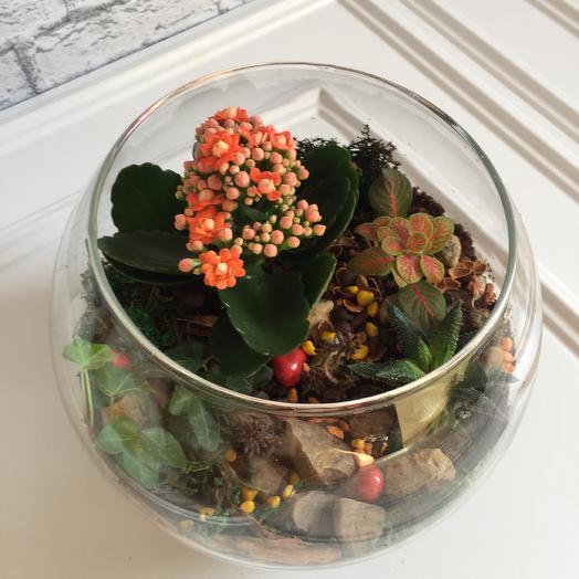 Флорариум «апельсинка»: букеты цветов на заказ Flowwow