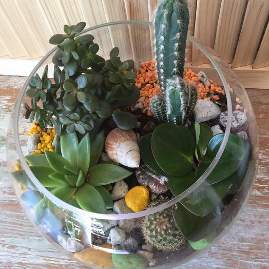 Флорариум «Гигант»: букеты цветов на заказ Flowwow