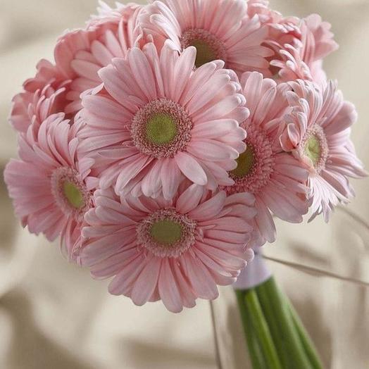 Нежные розовые герберы