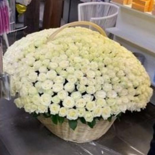 501 roses