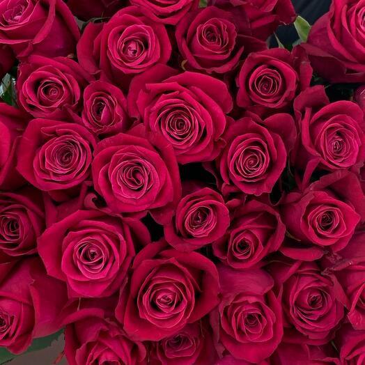 Роза сорта Шангрила