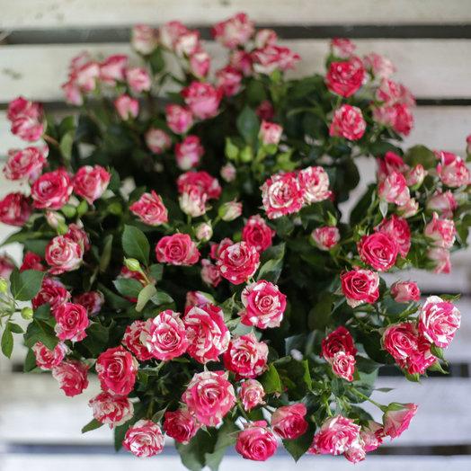 Букет из 17 розовых кустовых роз 50 см: букеты цветов на заказ Flowwow