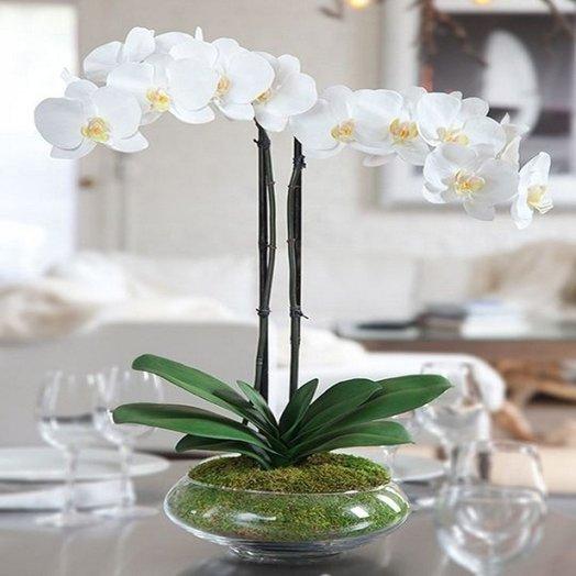 """Горшечный цветок Орхидея белая """"Маме"""": букеты цветов на заказ Flowwow"""