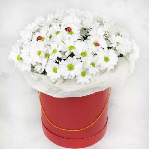 Хризантема бакарди в шляпной коробке: букеты цветов на заказ Flowwow