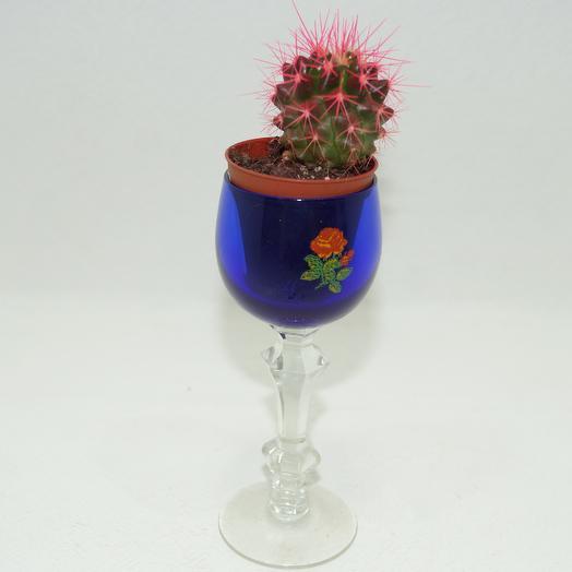Эхинокактус розовый: букеты цветов на заказ Flowwow