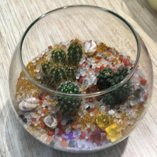 Яркий сад из кактусов