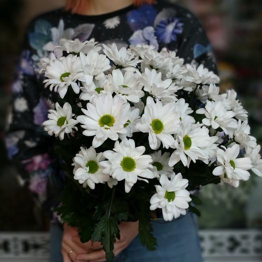 Ромашка Бакарди Хризантемы кустовые