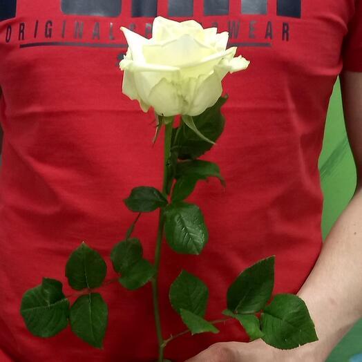 Роза White Naomi 50см