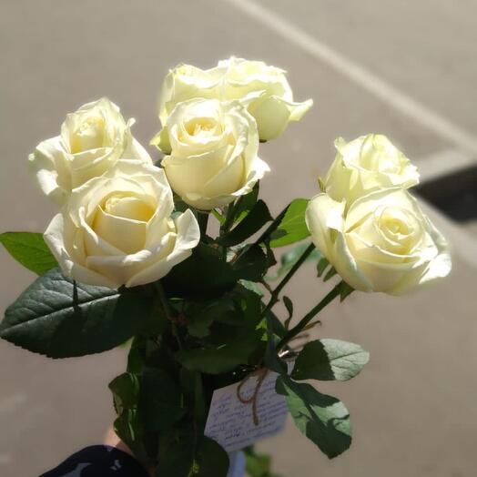 Белые розы 7 шт