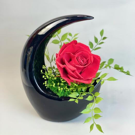 Алая Роза в чёрной вазе