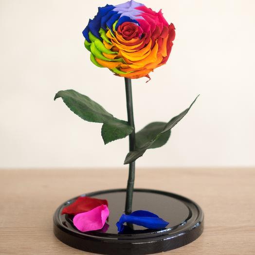 Роза в колбе Премиум радужная: букеты цветов на заказ Flowwow