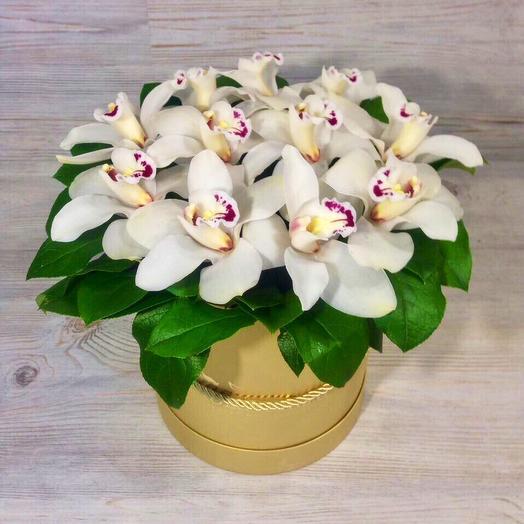 Шляпная коробка с орхидеей: букеты цветов на заказ Flowwow
