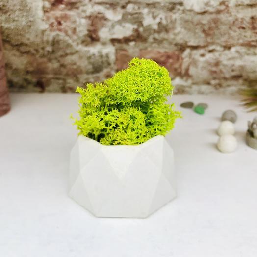 Кашпо из бетона со мхом: букеты цветов на заказ Flowwow