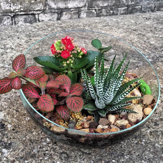 Флорариум «алый»: букеты цветов на заказ Flowwow