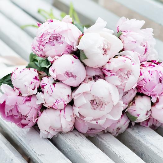17 Пионов Сара Бернард: букеты цветов на заказ Flowwow