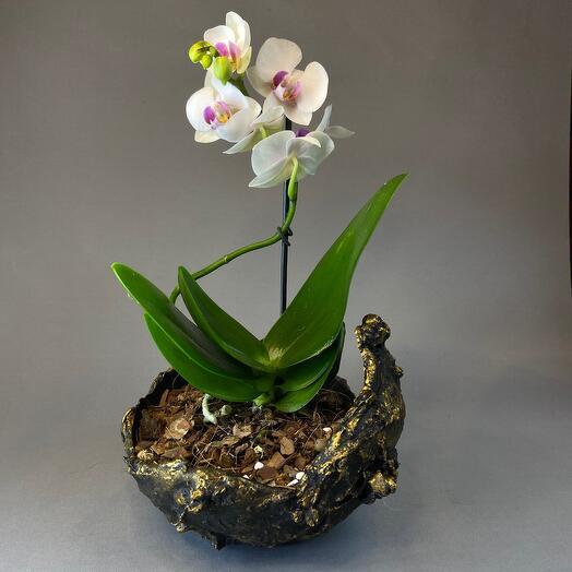 Орхидея в кашпо ручной работы