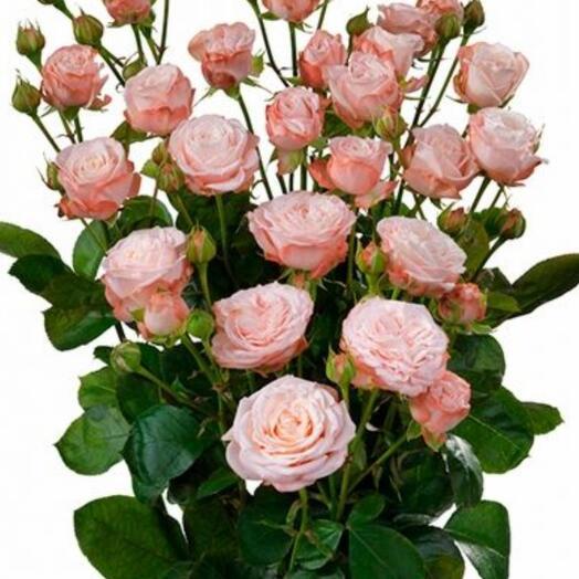 Роза кустовая пионовидная ветка