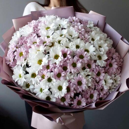 Хризантема кустовая 25 шт