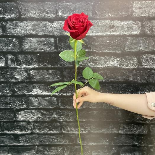 Роза Эквадор (Фридом) 70см