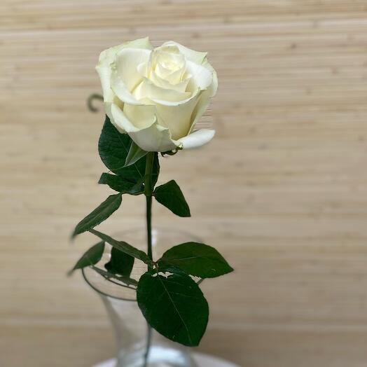 Роза Мондиаль 80 см