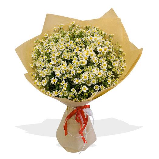 Букет из ромашек Камилла: букеты цветов на заказ Flowwow
