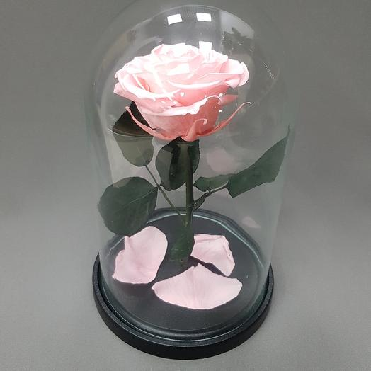 Роза в колбе: букеты цветов на заказ Flowwow