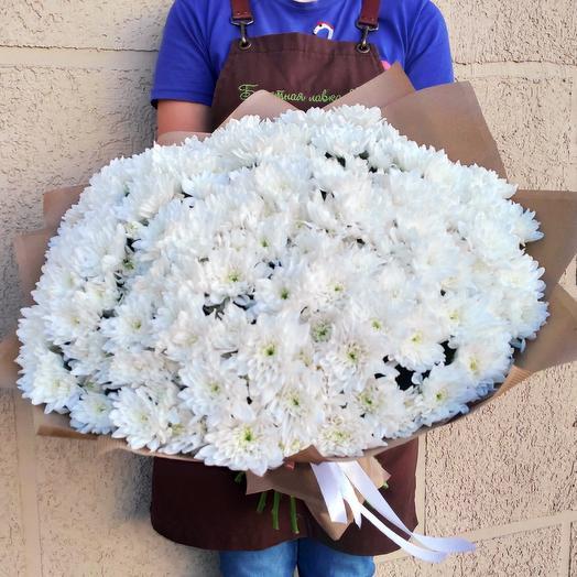 35 white chrysanthemum