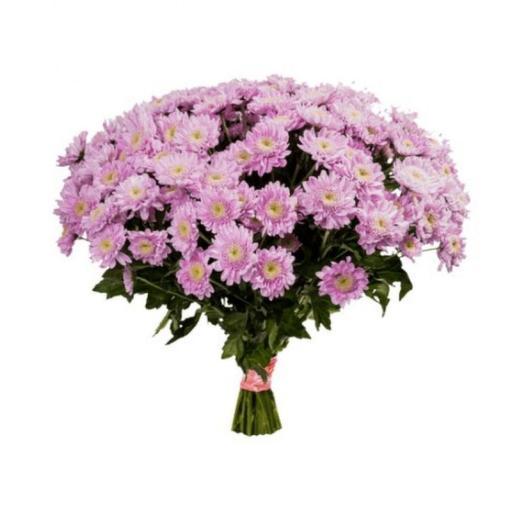 Хризантема розовая 7штук
