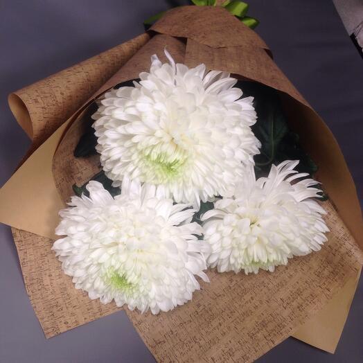 Хризантема шаровая