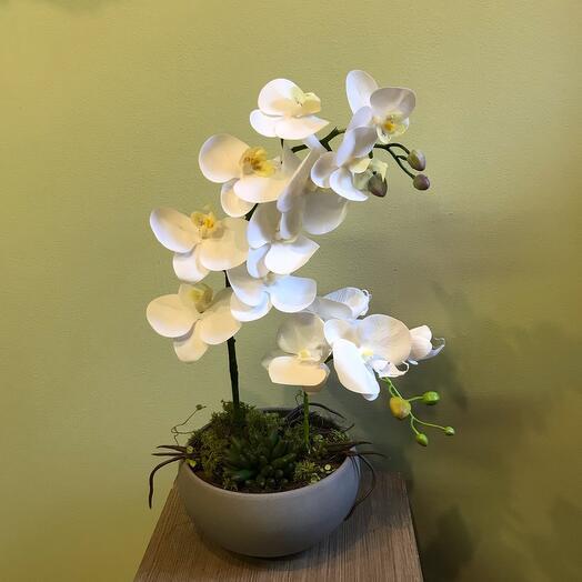 Интерьерная композиция с орхидеей