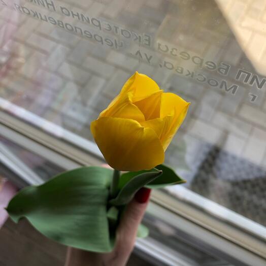 Тюльпан жёлтый 🌷
