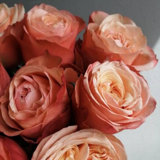 Букет-комплимент из 5 пионовидных роз
