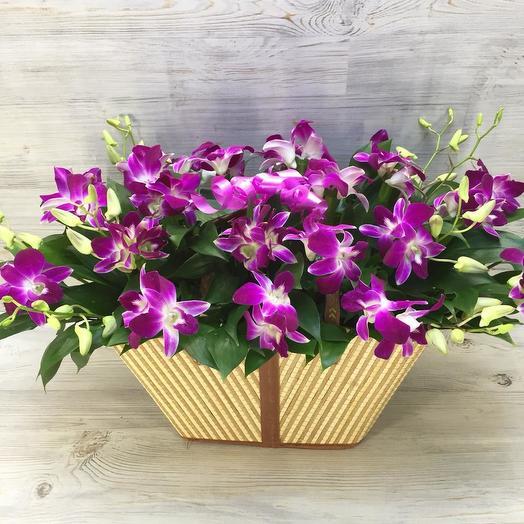 Корзина орхидей: букеты цветов на заказ Flowwow