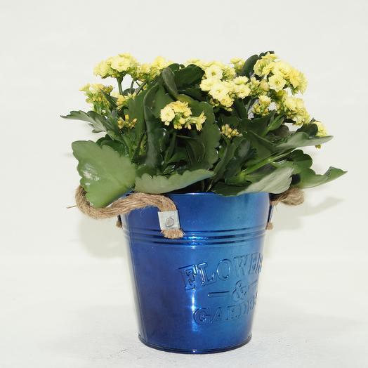 Цветущий каланхоэ в синим железном кашпо Гранни: букеты цветов на заказ Flowwow