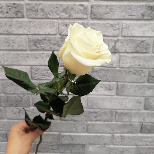 Роза VIP Premium Колумбийская