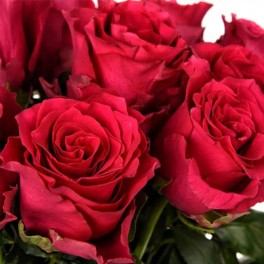 Красные сортовые розы
