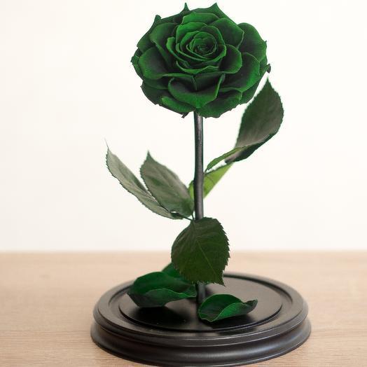 Роза в колбе Премиум зеленая: букеты цветов на заказ Flowwow