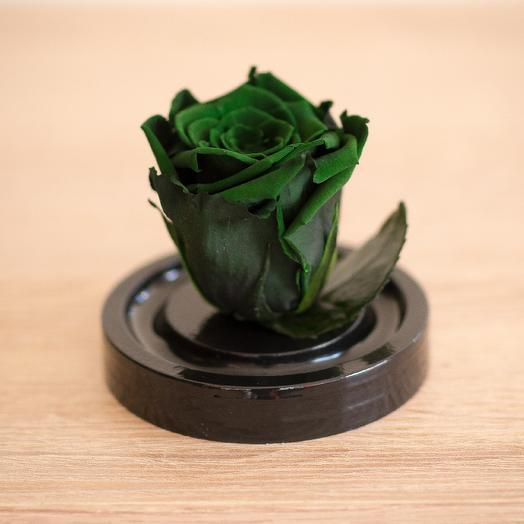 Роза в колбе Микро зеленая: букеты цветов на заказ Flowwow
