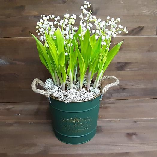 Ландыши, ландыши: букеты цветов на заказ Flowwow