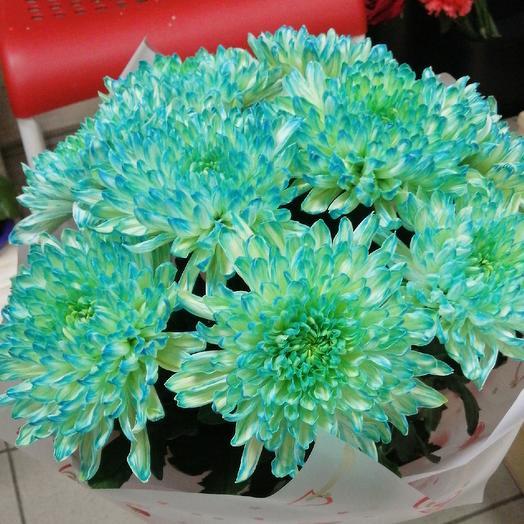 Хризантема крашенная: букеты цветов на заказ Flowwow