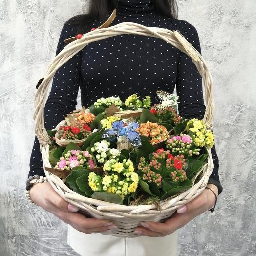 Композиция в корзине из каланхое: букеты цветов на заказ Flowwow