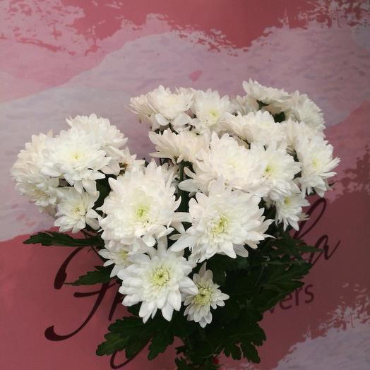 Букет хризантем под ленту