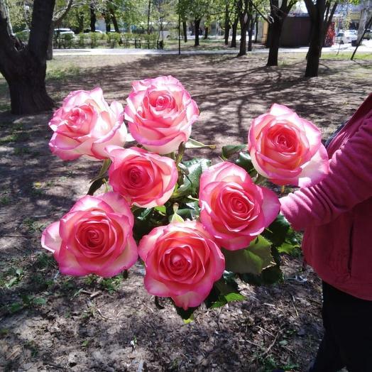 Роза-Джульетта
