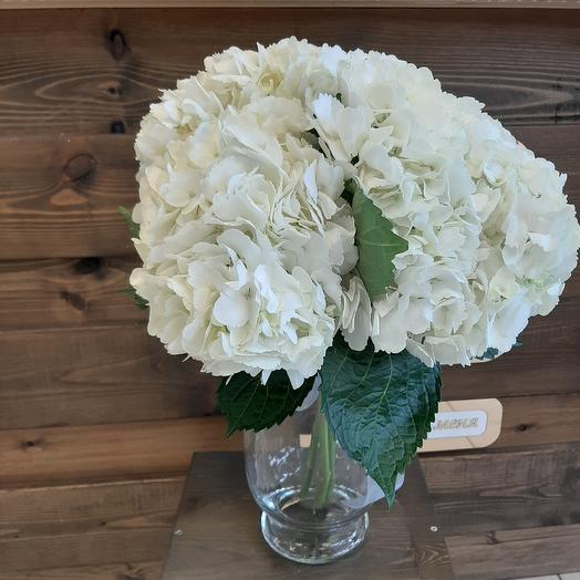 Гортензия 3: букеты цветов на заказ Flowwow