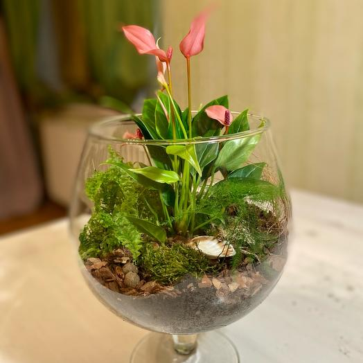 Цветущий многолетний флорариум «Тропики»