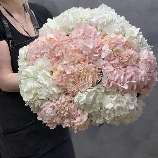 Бело-розовое Облако Гортензий: букеты цветов на заказ Flowwow