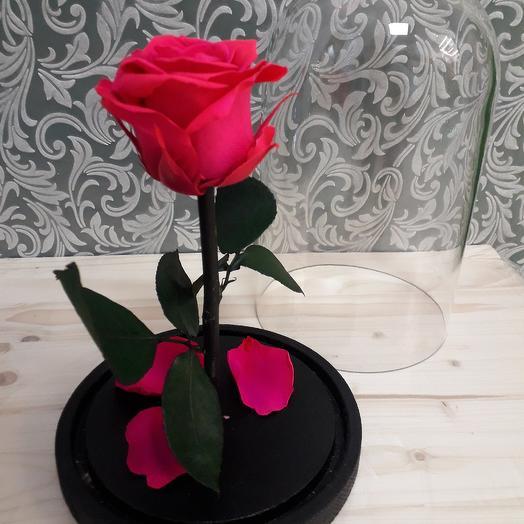 Стабилизированная роза Цикламен Premium: букеты цветов на заказ Flowwow