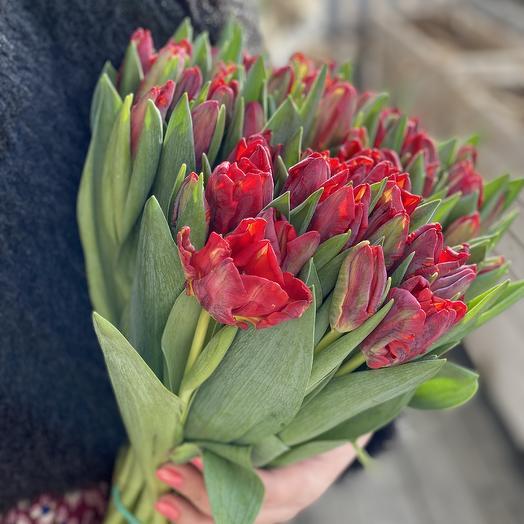Тюльпан рококо
